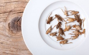 Insects as a protein source? Food expert Jill Frank discusses the alternative, sustainable protein options in this Prospector Industry Insights podcast.