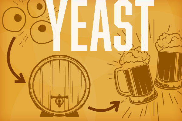 Yeast: The Secret Behind the Brew Infographic