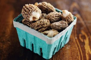 freshly picked morel mushrooms in basket