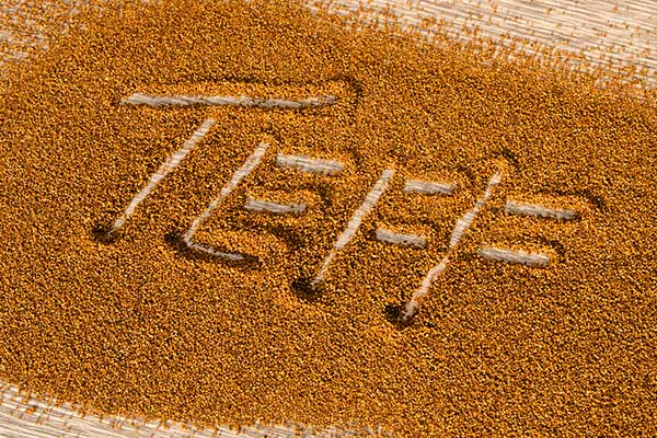 One Teff Competitor: What You Should Know About This Up-and-Coming Grain