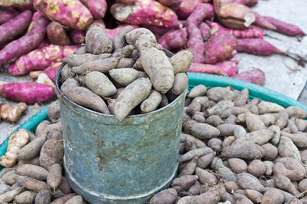 Inulin: Health Benefits, Food Applications and Market