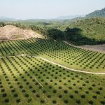 Palm tree farm - Learn more about palm oil in cosmetics